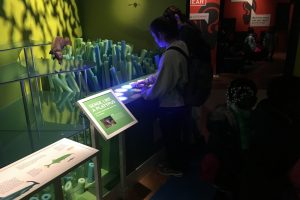 American Museum of Natural History | Our Senses | Platypus